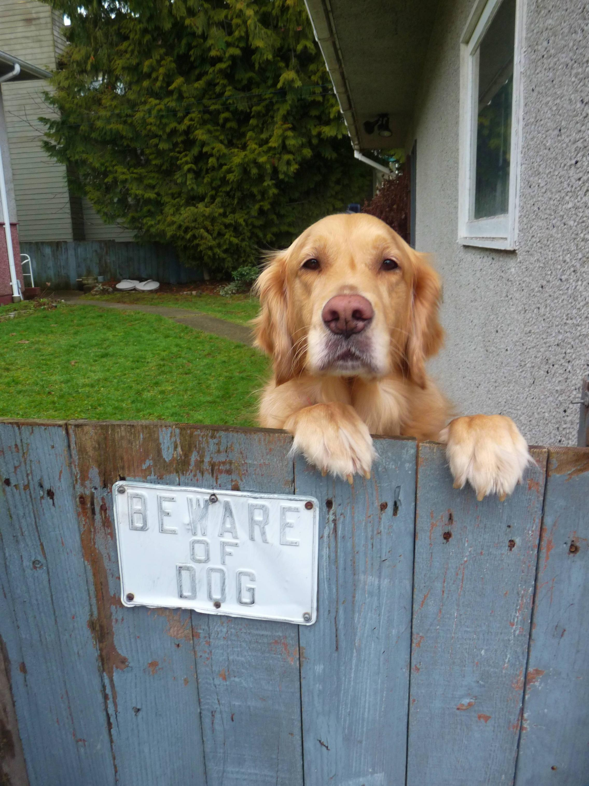 Dog-and-be-careful-of-dog sign