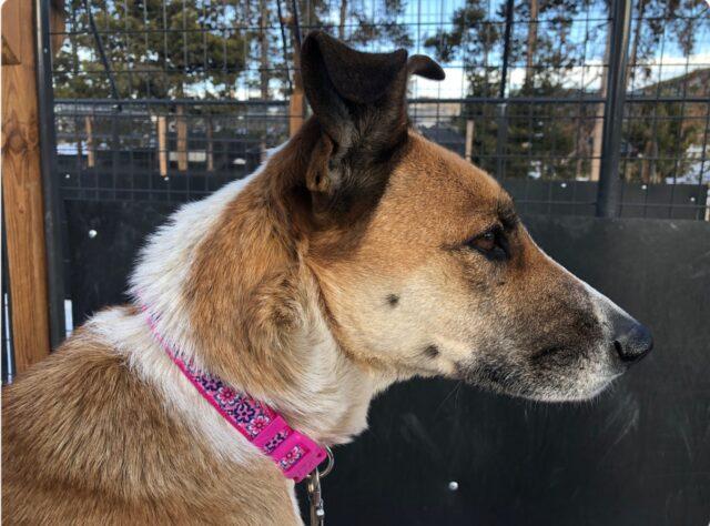 Piper Lost Dog