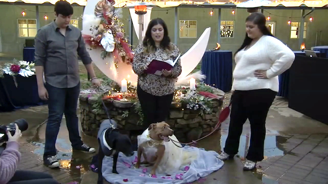 Rescue Dog Wedding
