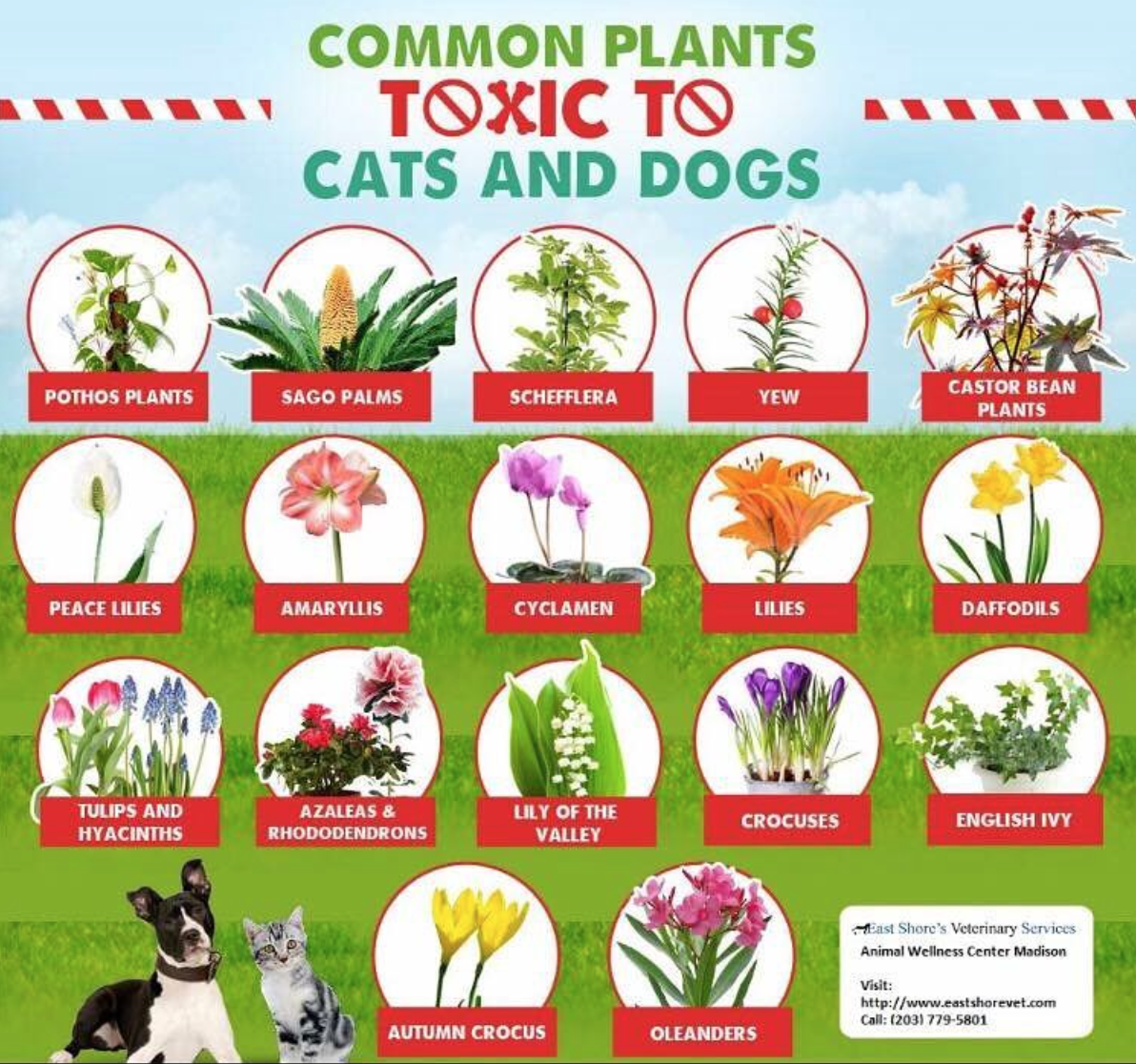 common flowers that are poisonous to dogs