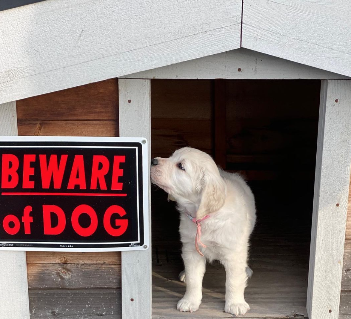 Beware of the cute dog