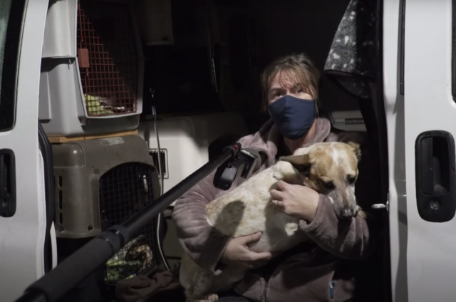Stolen Daycare Dogs