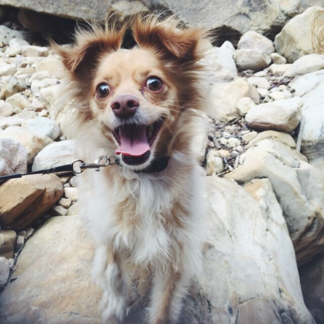 Dog excited for hike
