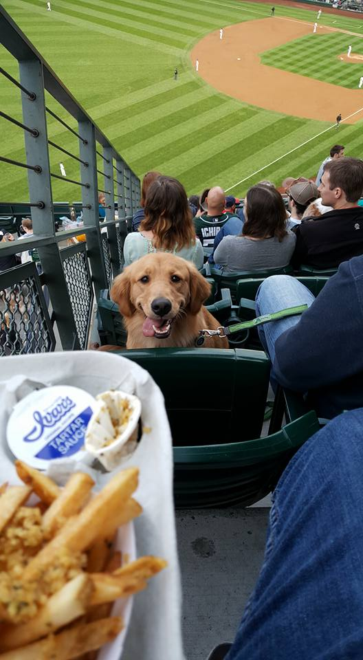 Hungry baseball dog