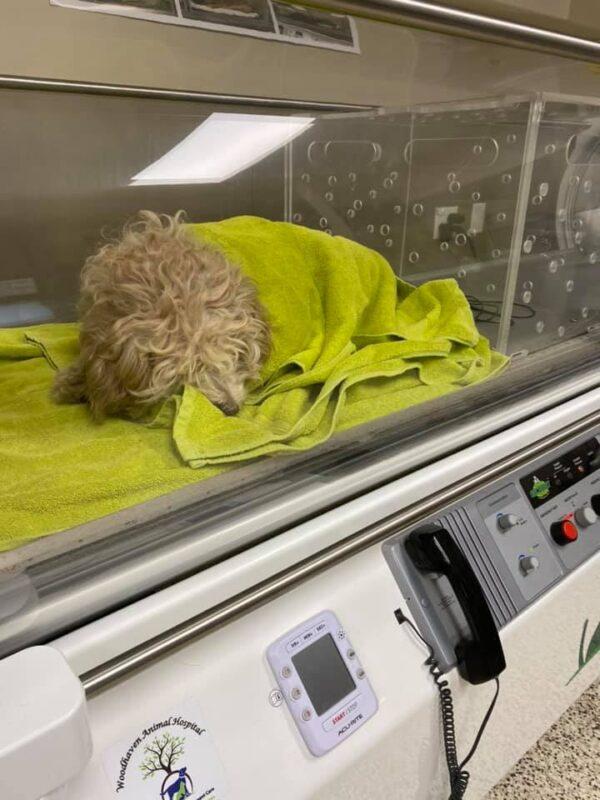 Miracle Dog Warming Up