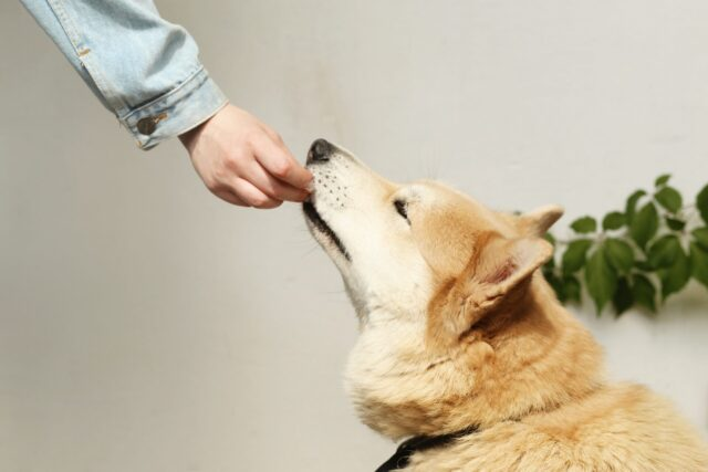 bland food for dogs