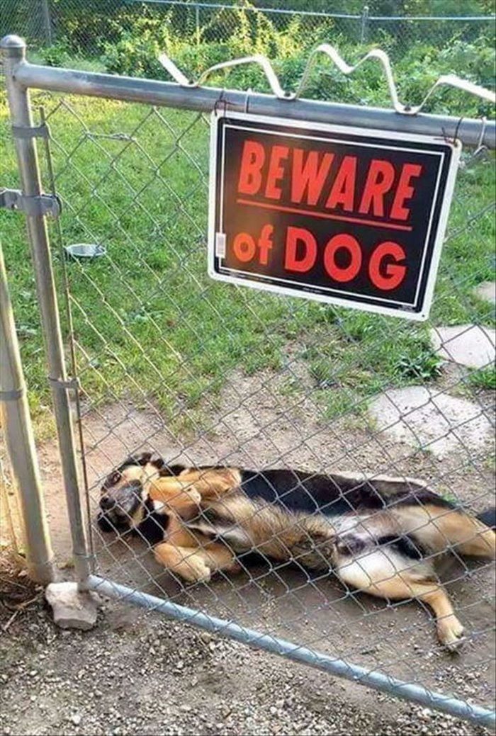 Bad-guard-dog-funny