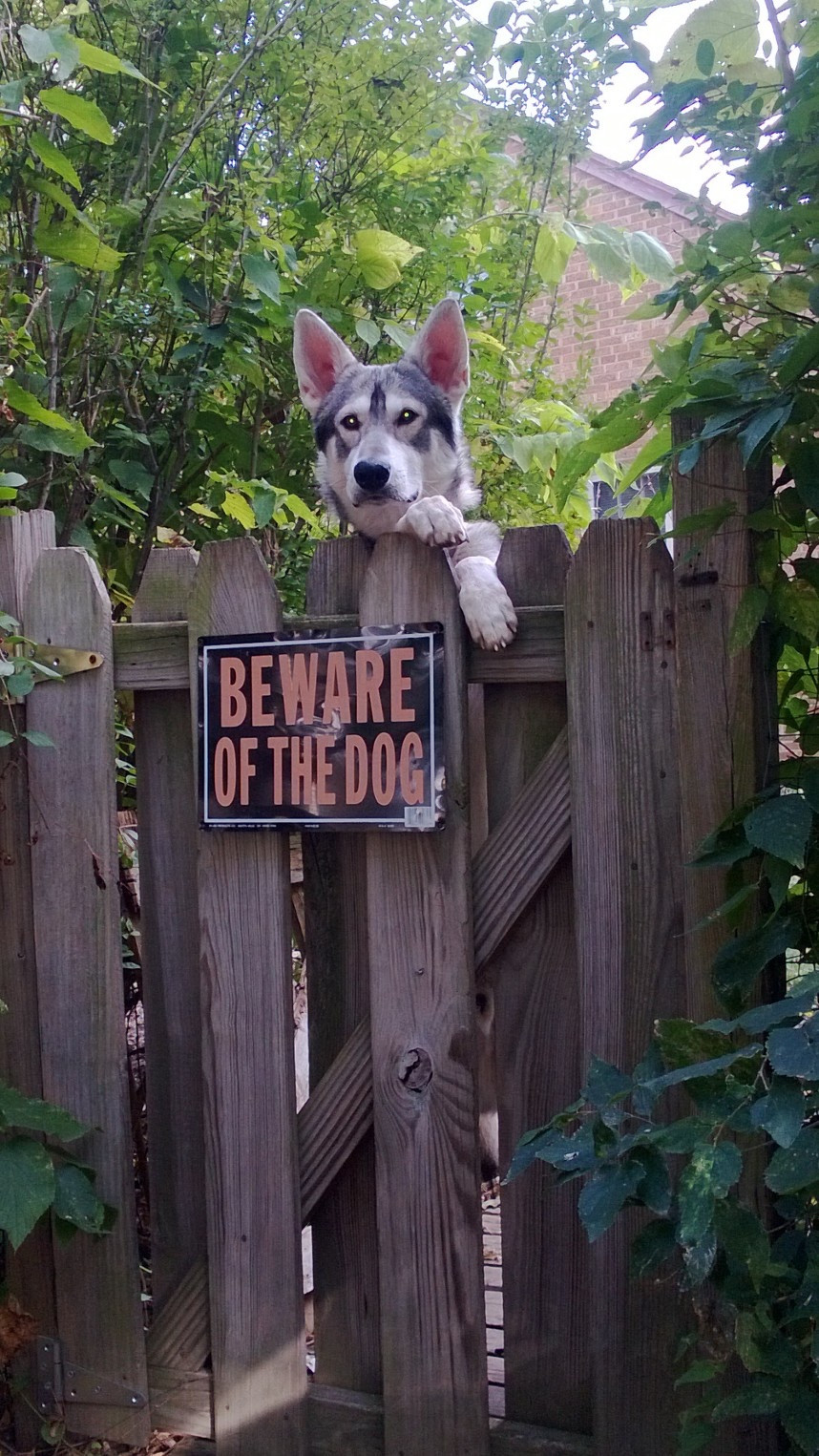 Chill-Guard-Dog-funny