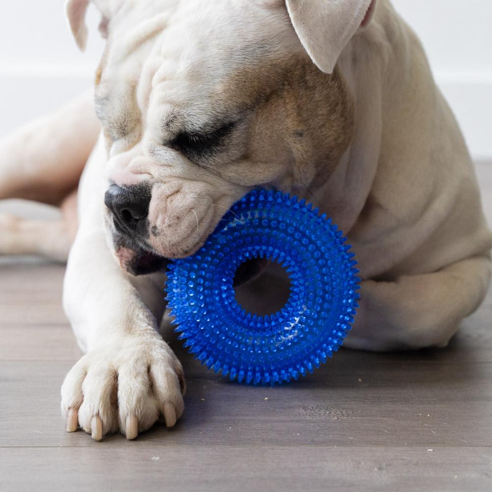 Fetch & Floss Dental Chew Toy