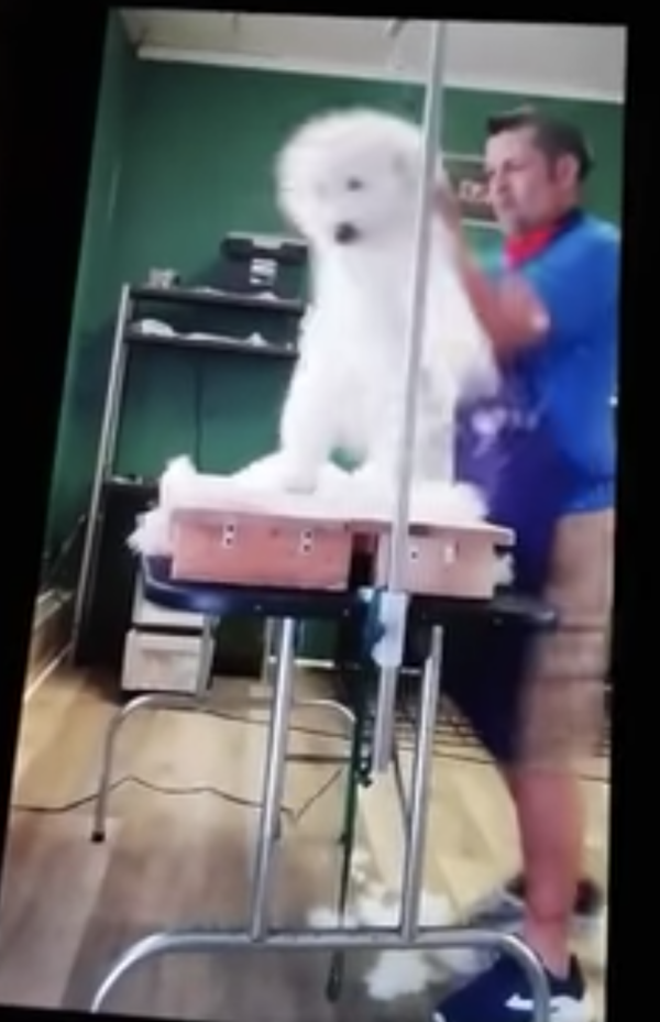 Abusive groomer