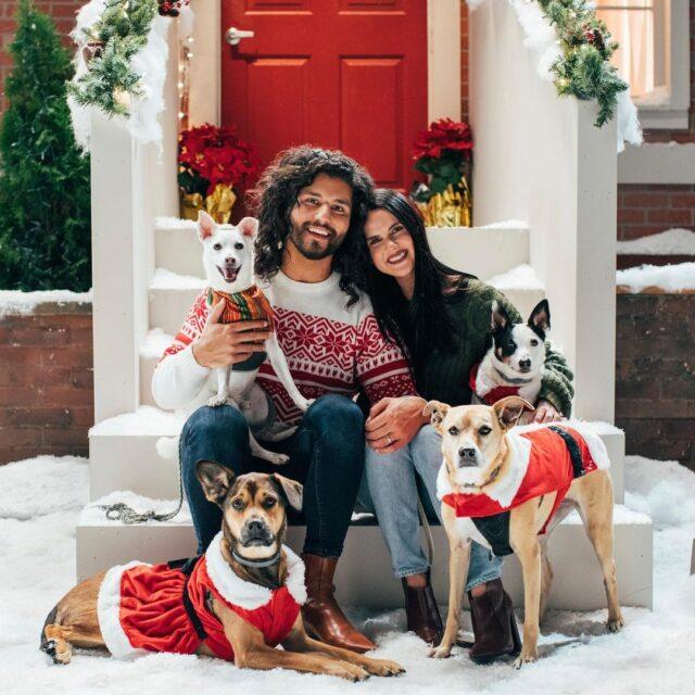 Dan Smyers Rescue Dogs