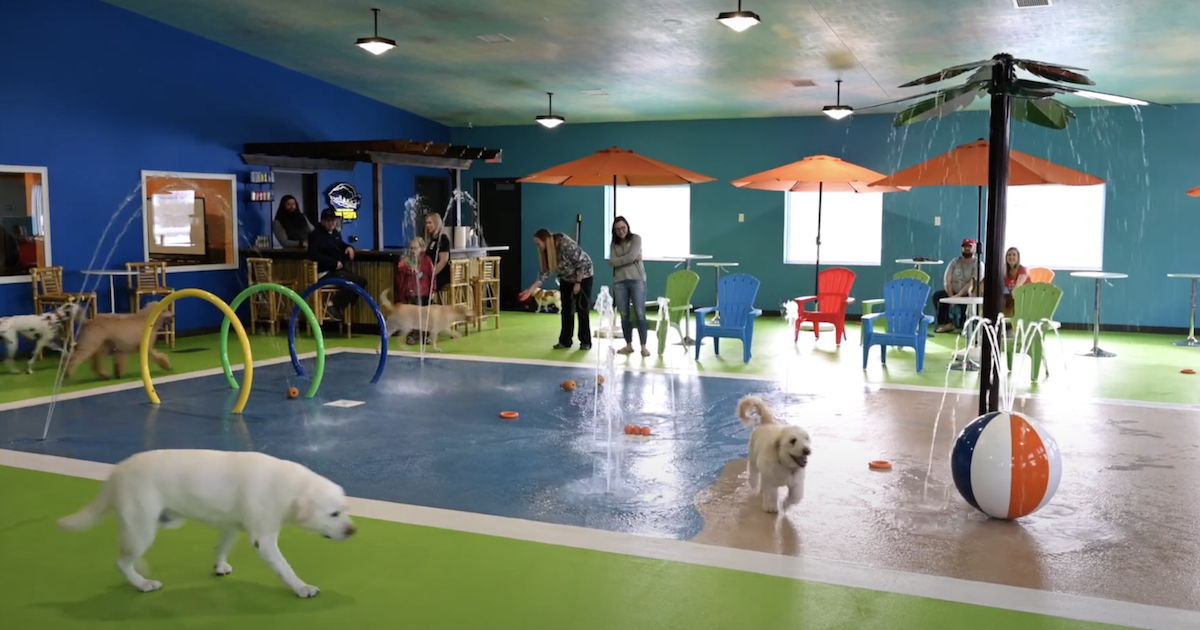Dog Water Park Facility