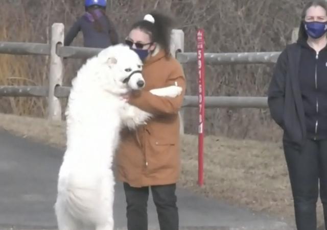 Dog hugging human