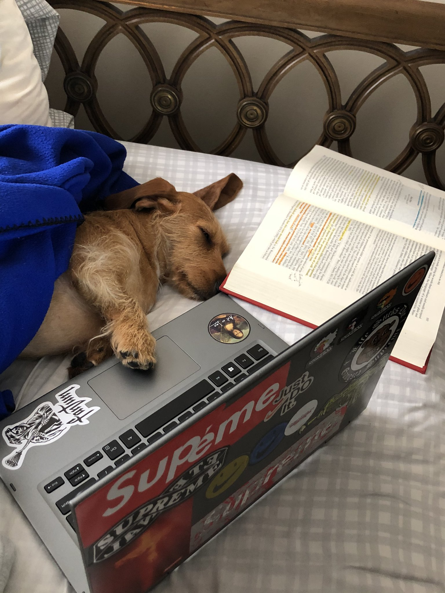 dog-studying
