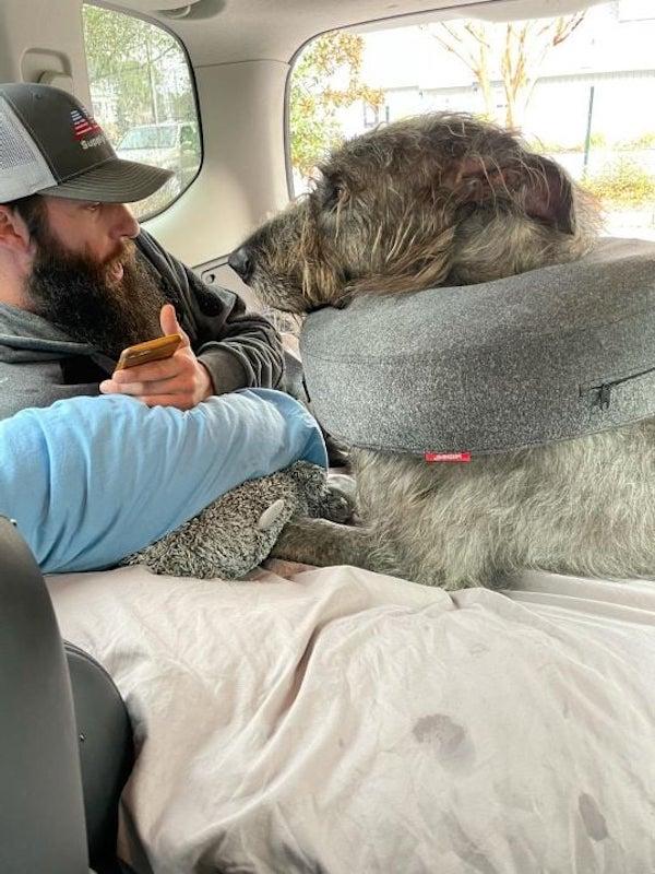 Irish Wolfhound Cone