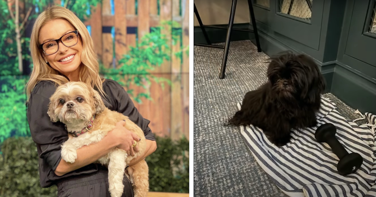Kelly Ripa new dog