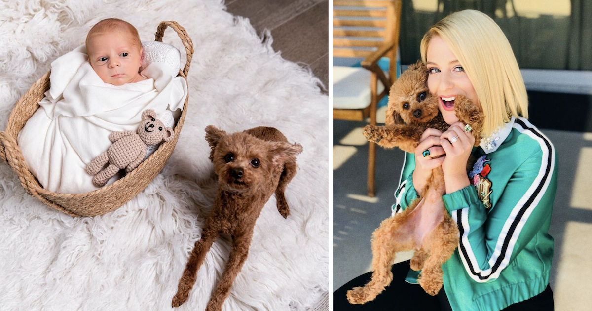 Meghan Trainor's Baby and Dog