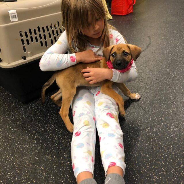 Pink's puppy Nash