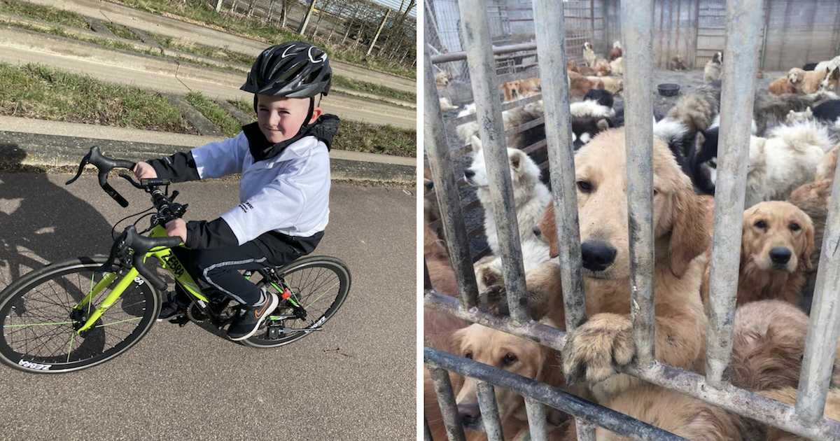 Boy biking for dogs