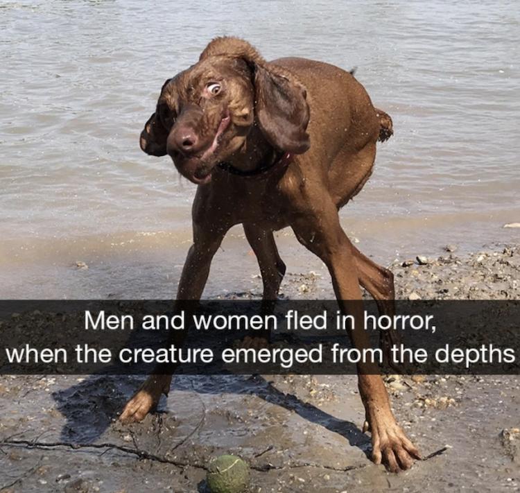 Dog lake monster