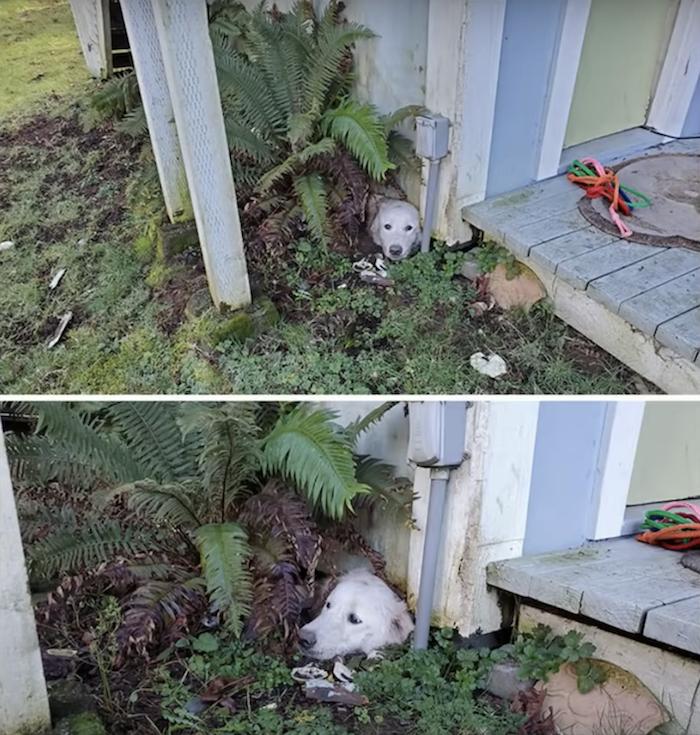 Dog stuck in garden