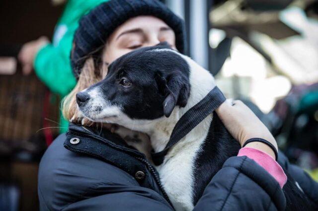 Hugging rescue dog