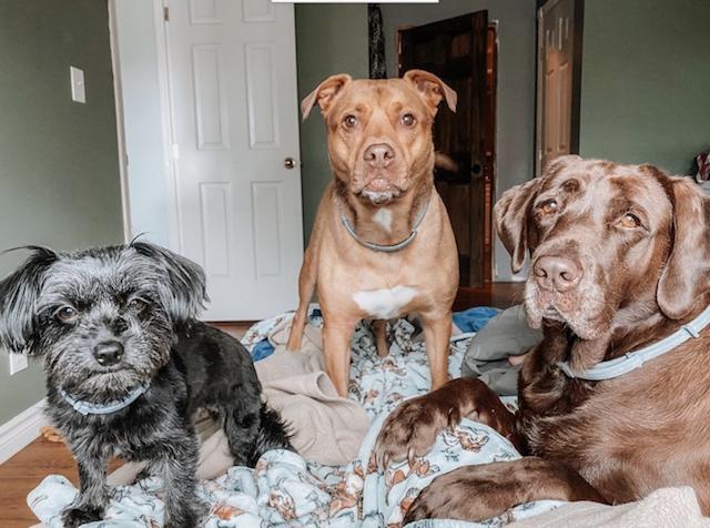 Dogs wearing Seresto collars