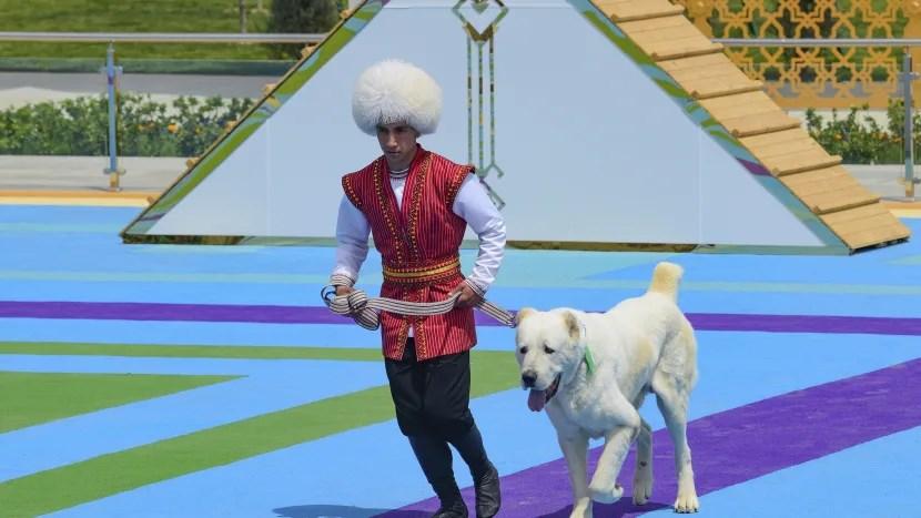 Alabai dog holiday