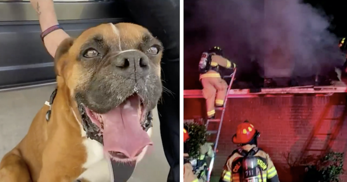 Boxer lost after fire