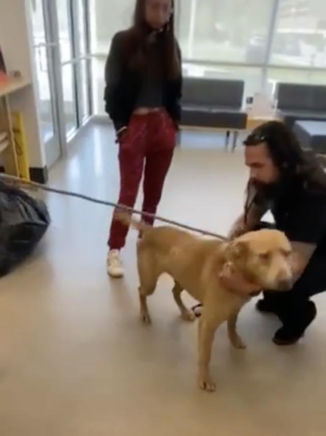 Dog Returns Home After 823 Days