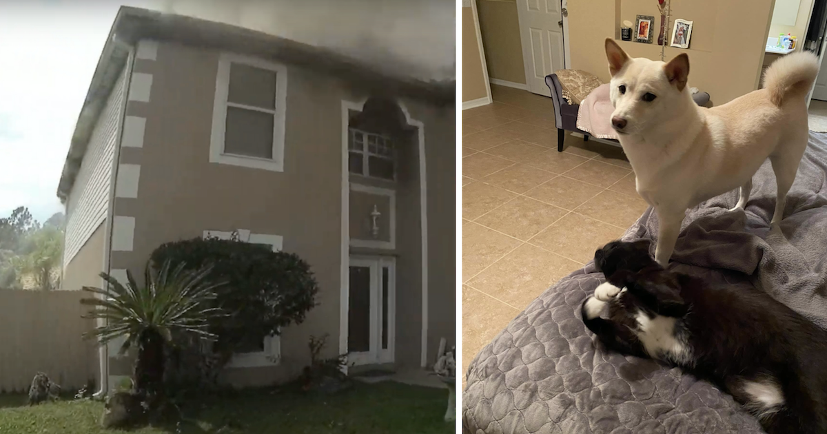 Dog Saved from Fire