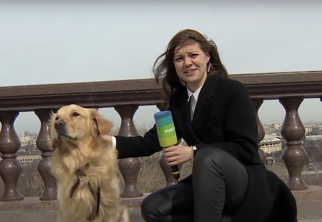 Dog and news reporter