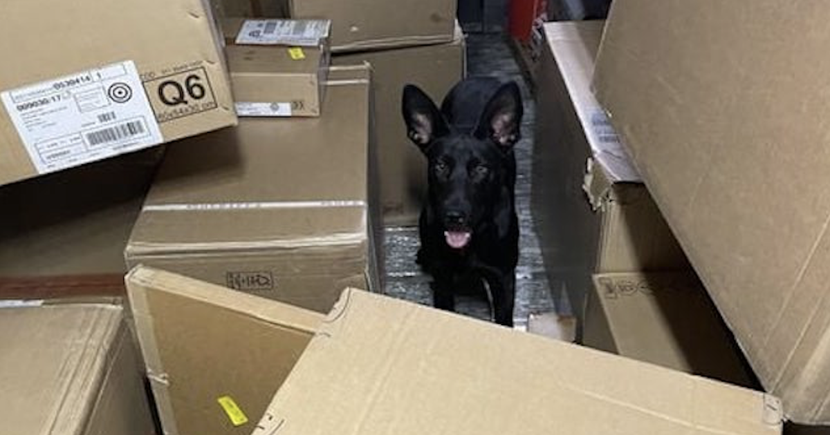 Dog in FedEx Truck