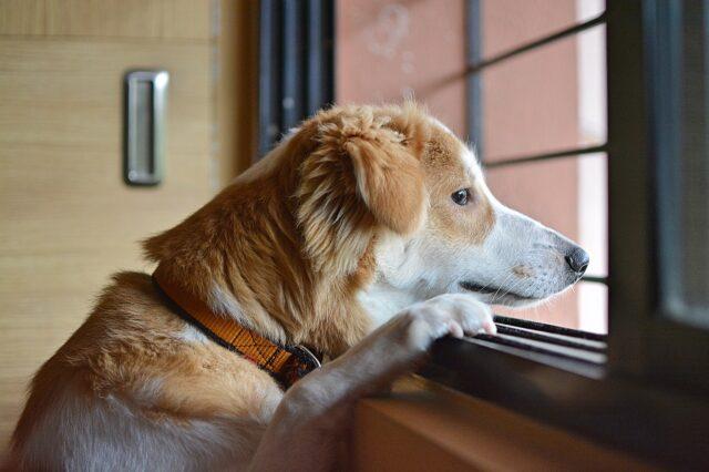 Dog waiting for human