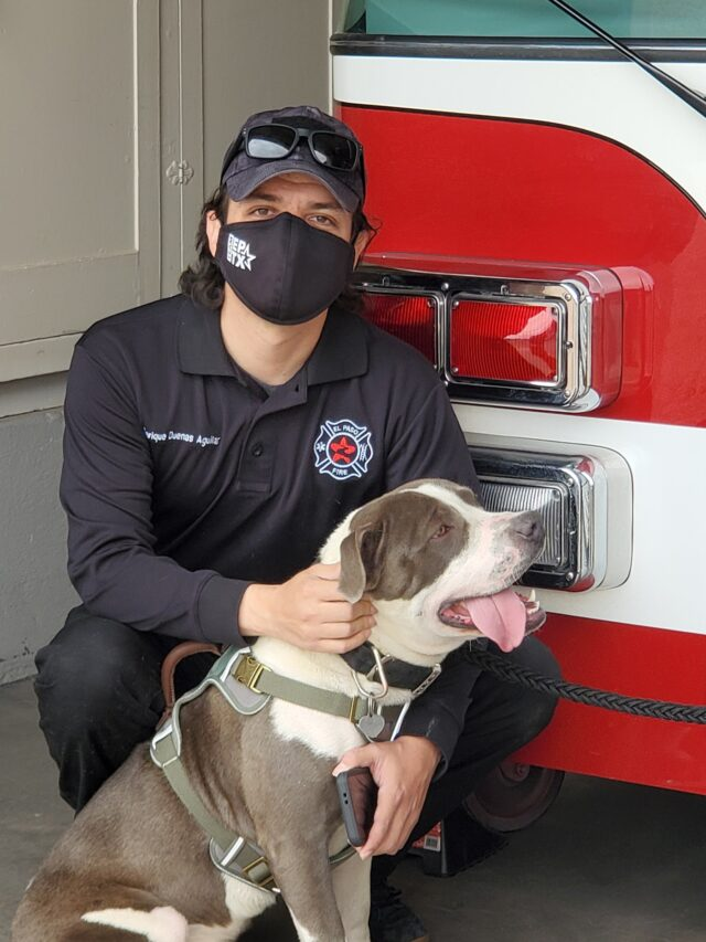 Firefighter and Pit Bull