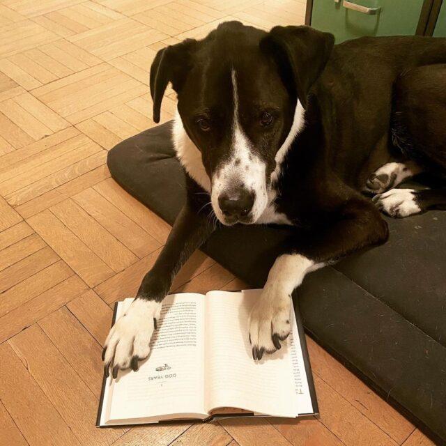 Gus reading a book