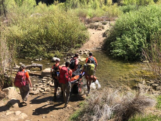 Injured Rottweiler crossing river