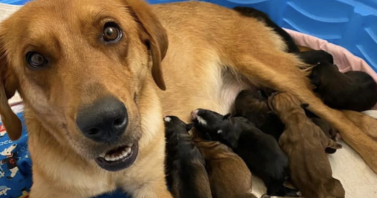 Maternity ward for dogs