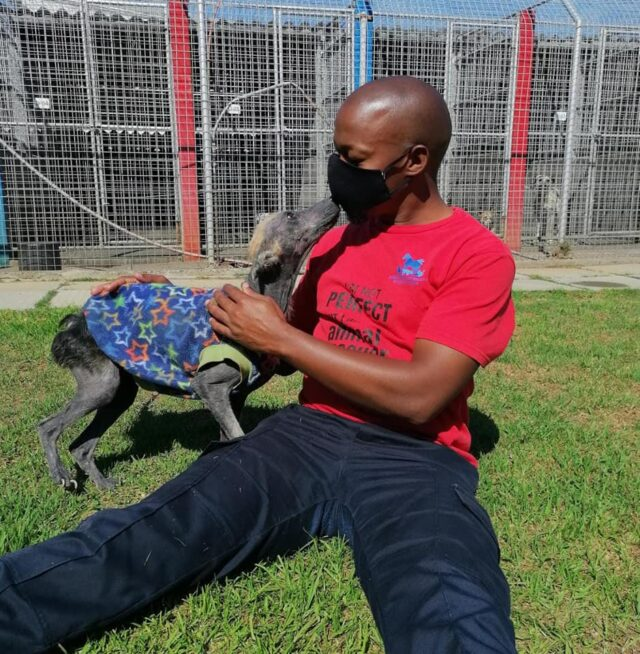 Neglected dog healing