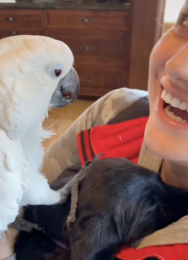 Parrot petting puppy