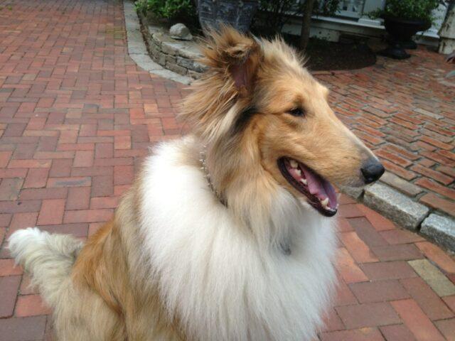 Ron Howard dog Cooper