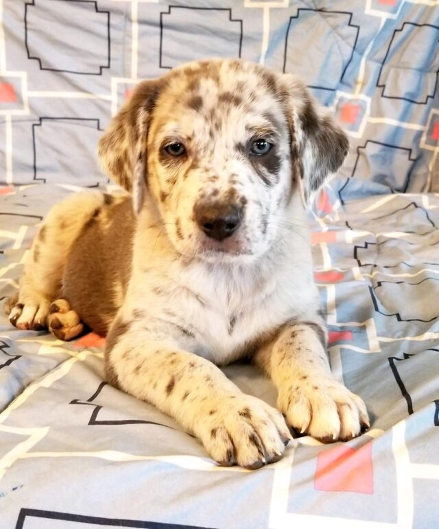 Spotted rescue puppy