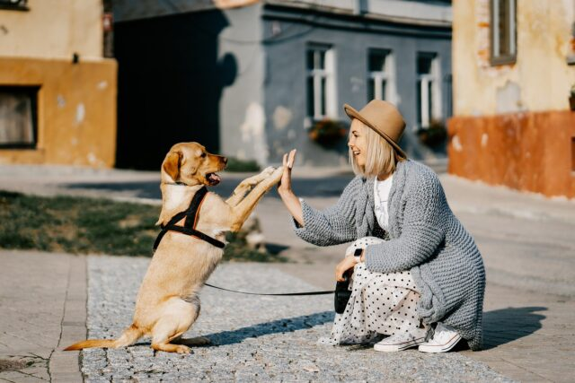Dog and human love