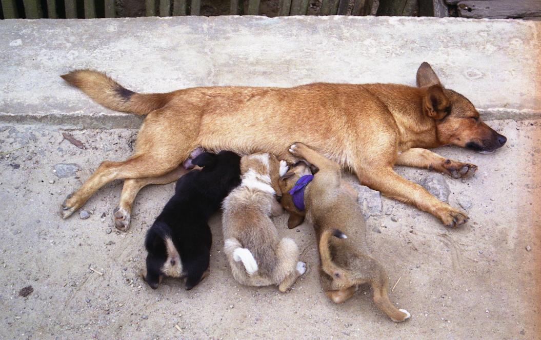 dogs-nursing-mothers-milk