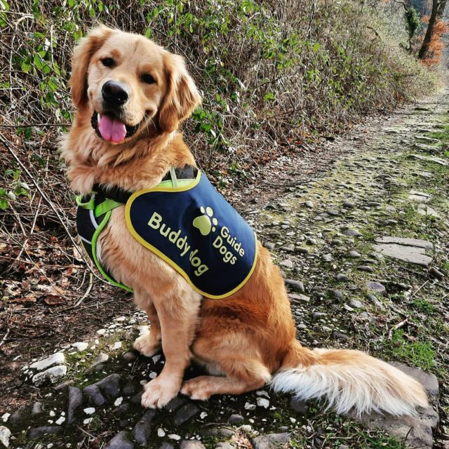 Buddy Dog Vesper