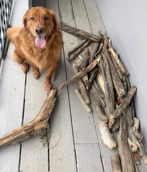 Bruce with his sticks