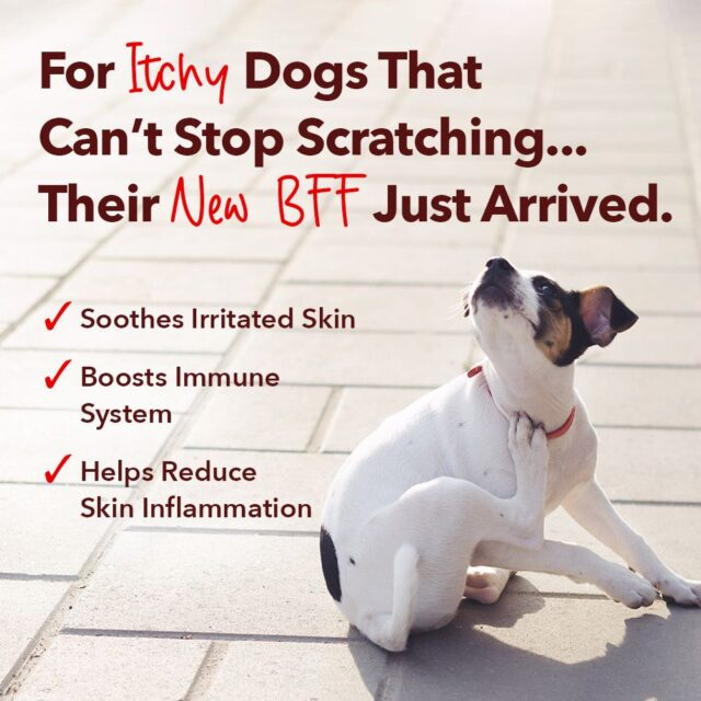 Allergy solution for dogs