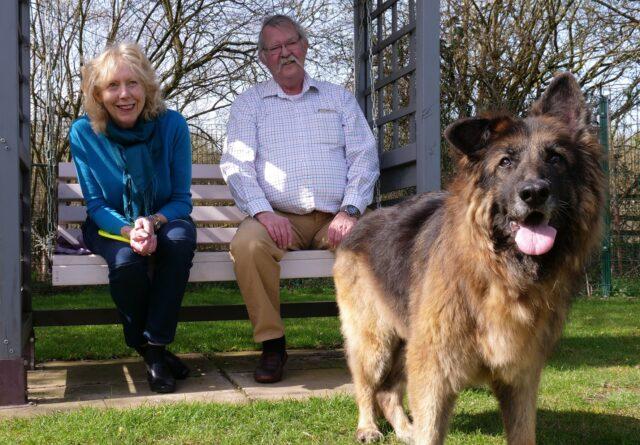 Couple adopted German Shepherd