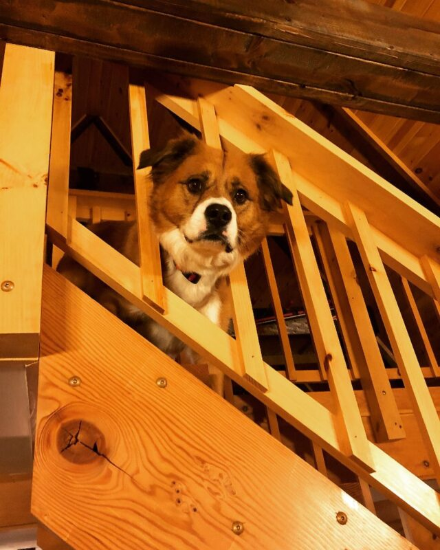 Dodger on the stairs