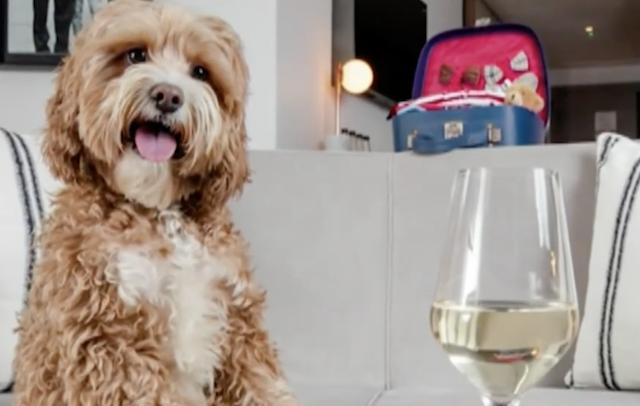Dog drinking safe wine